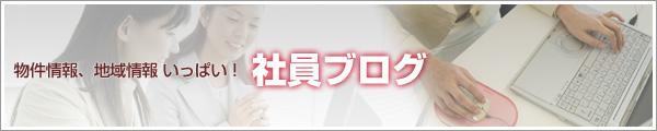 bunnner_blog.jpg